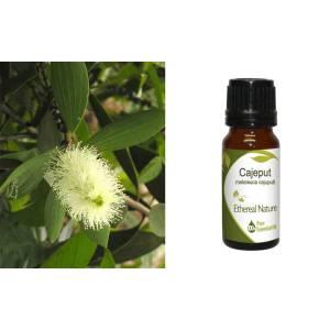 Λευκόδεντρο (Κατζεπούτ)
