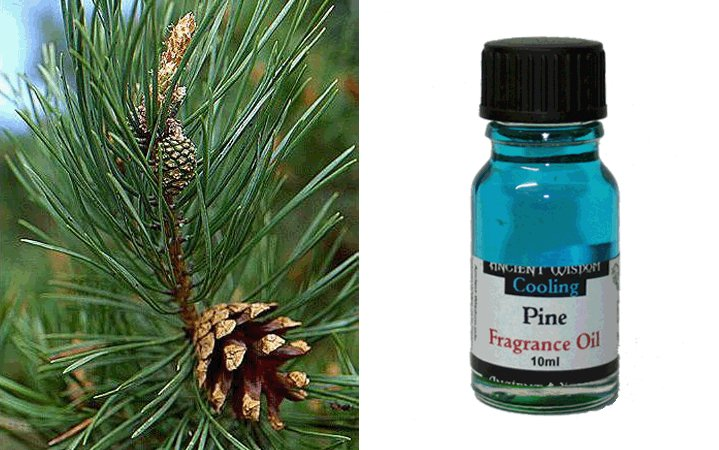 Pine (Πεύκο) 10ml