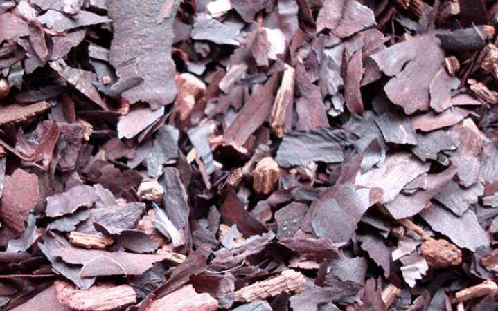 Αλκάνα βότανο