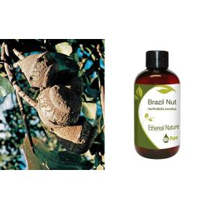 Brazil Nut (EB) 100ml