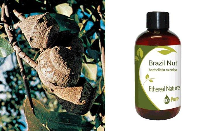 Brazil Nut 100ml