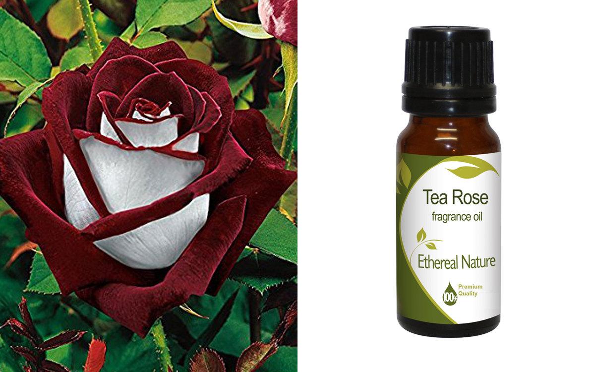 Tea Rose (AE)